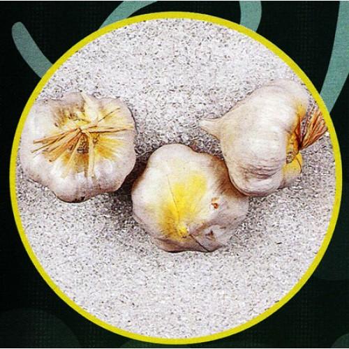 3 pezzi di aglio riccione finti mm 70x50 (prezzi per 1 confezione da 3 pezzi di aglio riccione)