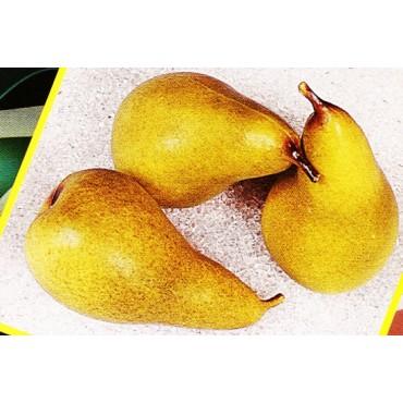 3 pere verdi finte mm 65x120 (prezzi per 1 confezione da 3 pere verdi)