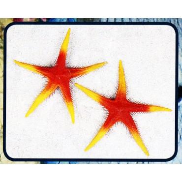 Stelle marine finte colore arancio mm 250