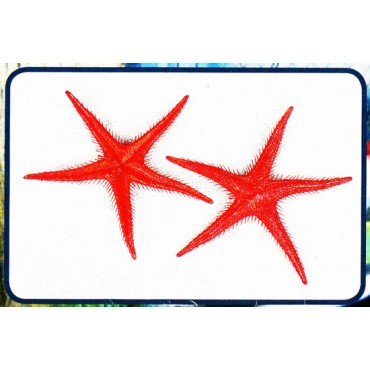 Stelle marine finte colore rosso mm 250